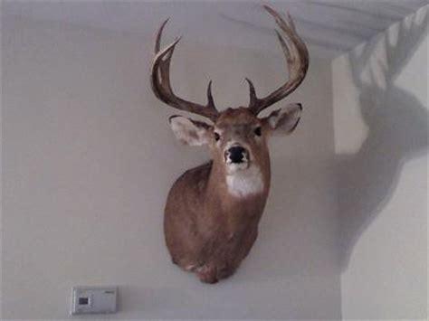 deet and taylor whitetail buck records