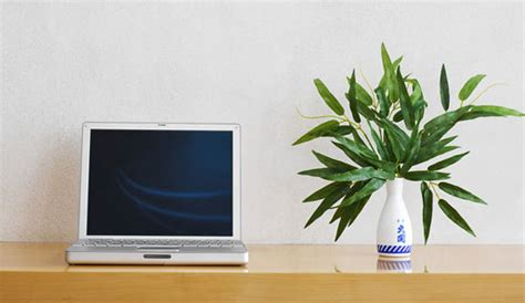 plant for desk boost your mood with a desk plant popsugar smart living