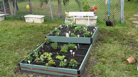 Garden Grove Elementary School Supply List Coconut Grove Grapevine Students Plant Organic Gardens At