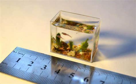 membuat aquarium sederhana  mudah  ikan hias