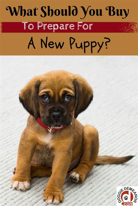 what to buy for a puppy the 25 best new puppy checklist ideas on puppy list new puppy and