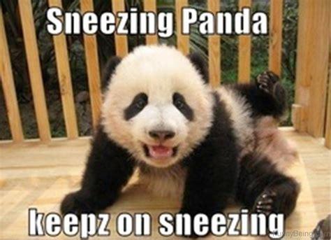 Sneezing Panda Meme - sneezing panda meme 28 images ragegenerator rage comic