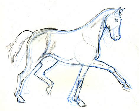drawn from the archive lineandwash third horse drawing from the archive