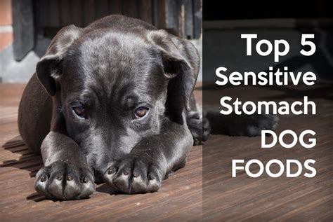 best puppy food for sensitive stomach best puppy food for sensitive stomach and diarrhea