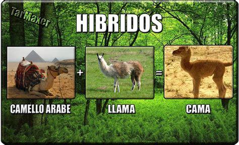 fotos animales hibridos reales hibridos de animales reales taringa