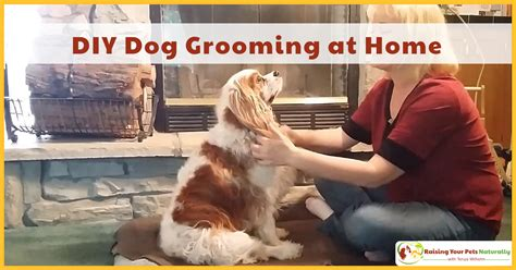 puppy s at home diy grooming at home basic grooming and how to cut a s hair cavalier