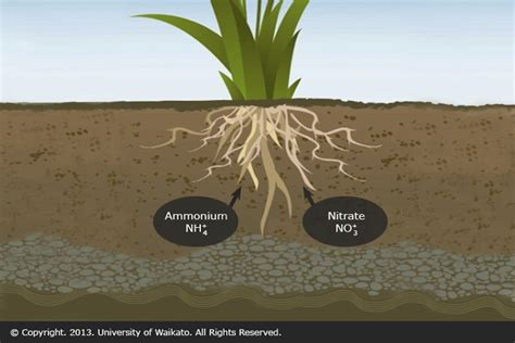 plant uptake of nitrogen compounds science learning hub
