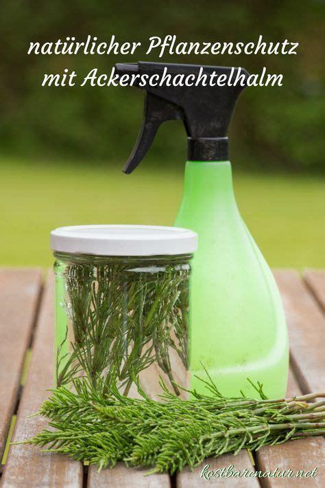 Pilze Im Garten Hausmittel by Nat 252 Rliche Pflanzenschutzmittel Mit Ackerschachtelhalm