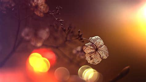 dried plant  bokeh lights macro photography