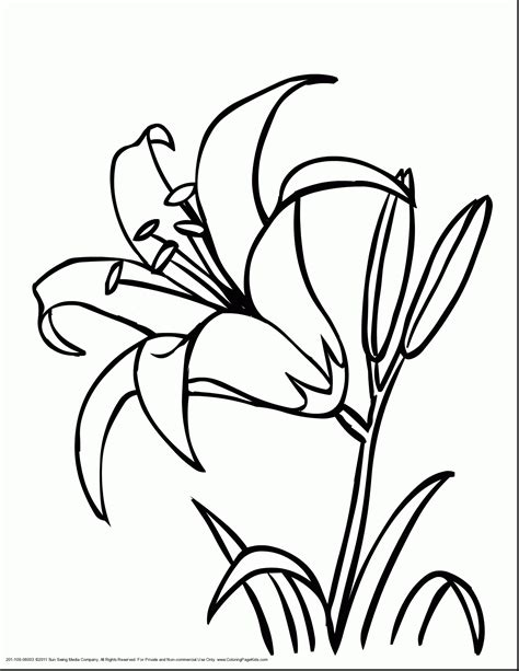 coloring pages of rainforest flowers rainforest flowers coloring pages coloring pages ideas