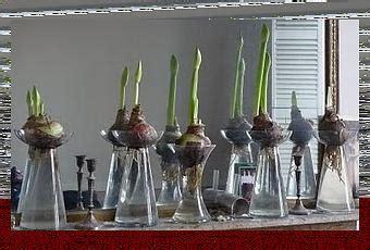 vasi per bulbi vasi in vetro per bulbi coltivati in acqua paperblog