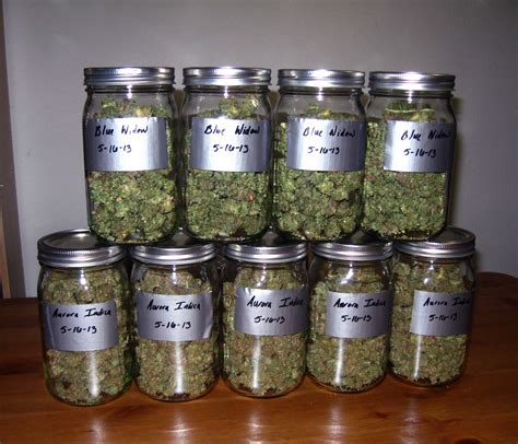 Blue Moon 7 03 Ct scout cookies sour diesel green grand