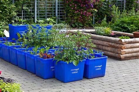 grow vegetables  plastic tubs vegetables growing