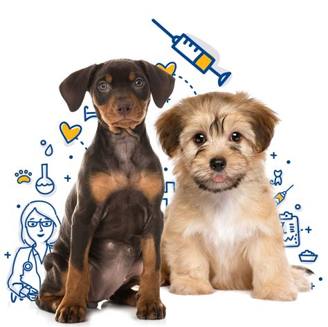 cheap puppy vaccinations vaccinations mercy pet clinic