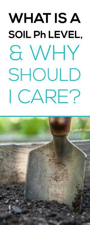 gardenia care guide why didn t i think of that 17 best images about gardening tips and plants on pinterest