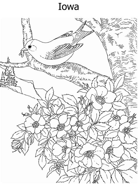 coloring pages of state birds and flowers state flower and state bird coloring page
