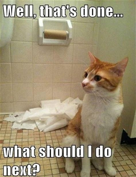 Funny Memes About Cats - 10 funny pet memes