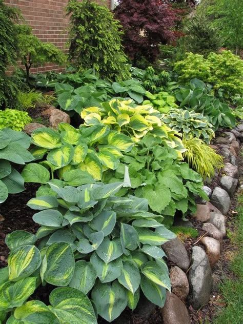 hosta garden perfect for the shady corner in our backyard and stones are already laid out so