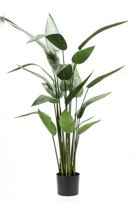 gartenshop bestellen kunstblumen bestellen terrapalme heim und gartenshop
