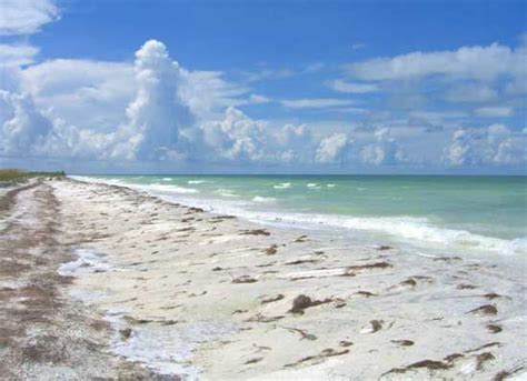 honeymoon island the ramblin ta travel guide and trip planner honeymoon island dolphins and