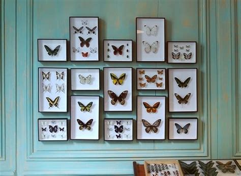 Butterfly Frames Wall Decor Wholesale 17 Best Images About Entomology On Frame