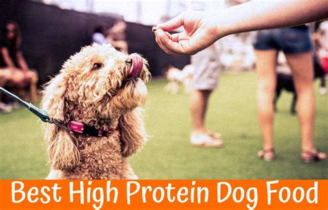 high protein puppy food the guide to buying the best high protein food in 2017 us bones