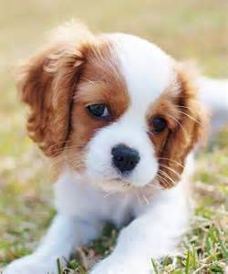 Small Stay At Home Dogs 25 Best Ideas About Small Dogs On Cutest
