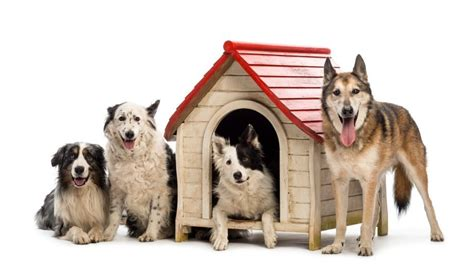 When Do Search For Pet Boarding What Five Things You Should Ask When Selecting A Boarding Facility