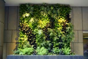 Vertical Garden Plants On Walls Vertical Garden Systems 6 Months Mature