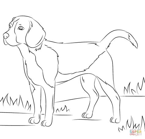 beagle dog coloring page beagle dog coloring page free printable coloring pages