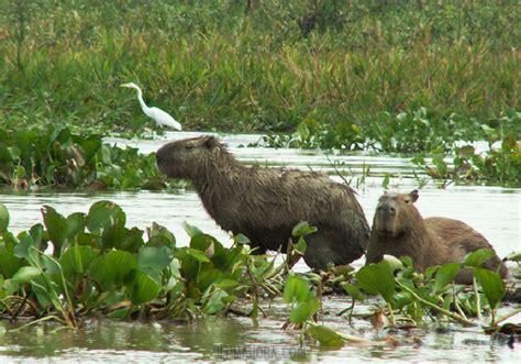 imagenes de animales naturales hermosos paisajes del paraguay taringa