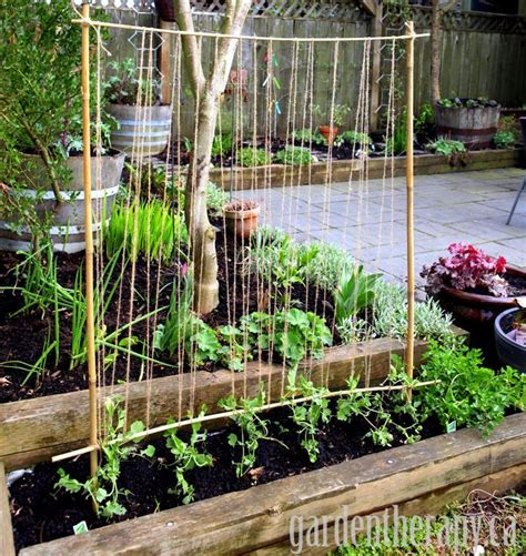 Make Plant - how to make a pea trellis