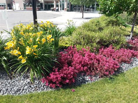 creative landscape design 41 best perennials that we and use images on perennials drought tolerant and