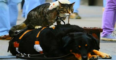 why don t cats and dogs get along cat and rat are unlikely best friends why can t humans get along like this