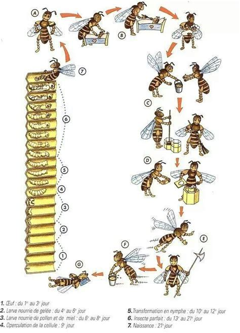 backyardhive new dvd alternative beekeeping using the top 329 best images about thema bijen kleuters theme bees