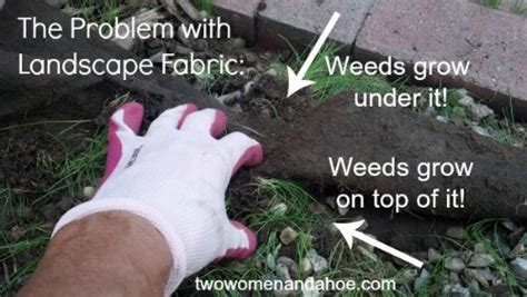 Garden Hoe Types - landscape fabric weed barrier cloth does not work