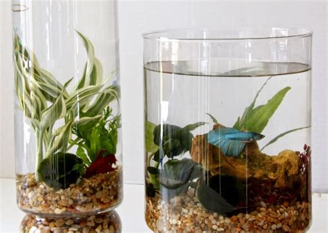 diy indoor water garden tilly s nest