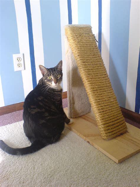 kat krabt aan behang help mijn kat vernielt mijn meubels design for delight