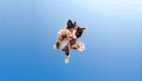 animali volanti ecco i gatti volanti che aiutano le adozioni supereva