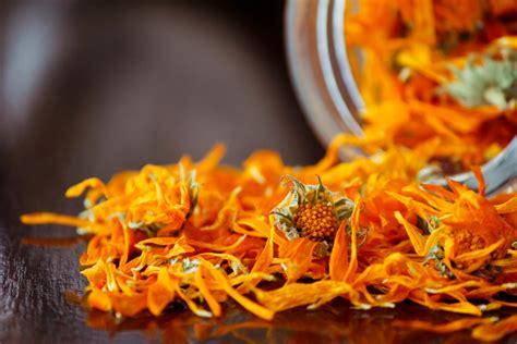 fiore di calendula bellezza e fitoterapia la calendula fashion bio