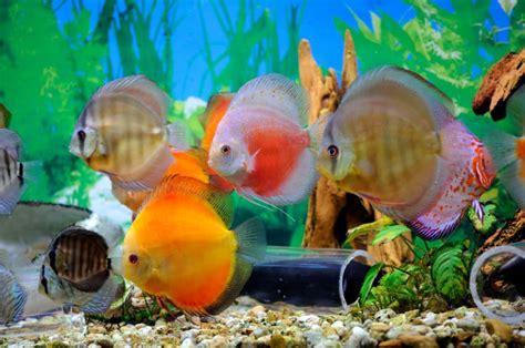 alimentazione pesci alimentazione per i pesci d acquario purina it