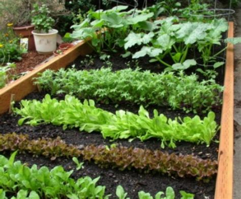 Great Garden Ideas Great Vegetable Garden Ideas Vip Seo Lima City De