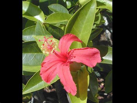 Indian Garden Flowers Top 10 Common Indian Garden Plants Boldsky