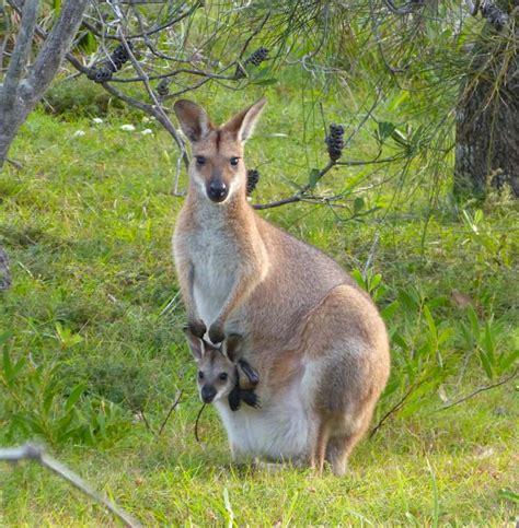 imagenes animales viviparos 191 cu 225 les son los animales viv 237 paros respuestas tips