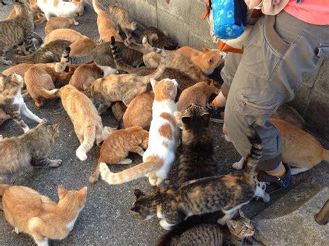 cat island japan cat heaven island visual ioner