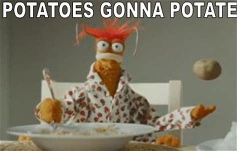 Meme Muppets - my muppet memes muppet central forum
