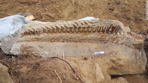 Who Find Dinosaur Bones Backhoe Cuts Into Dinosaur S Revealing Fossil Find Fossils Prehistoric