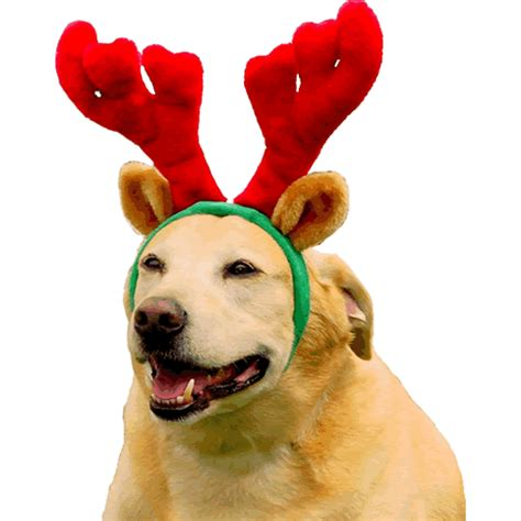 christmas reindeer antlers for dogs by kyjen great fun