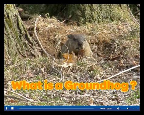 groundhog day eng what is a groundhog scholastic