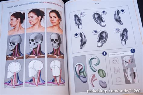 anatomy coloring book half price books book review anatomy for sculptors understanding the